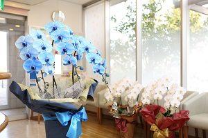 開院祝いの花